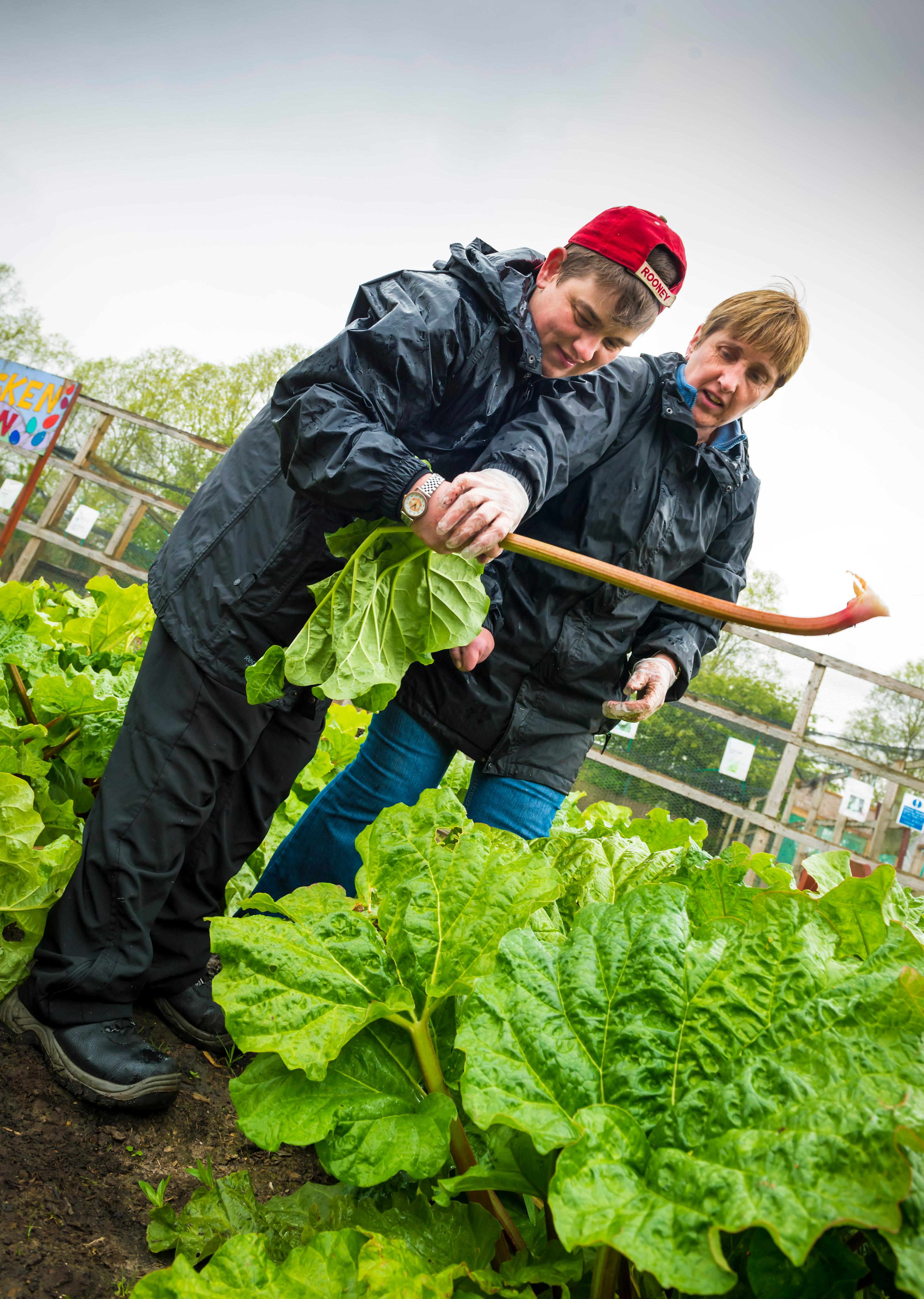 Oldham Council is developing a recipe for success using innovation to create a sustainable local food chain.